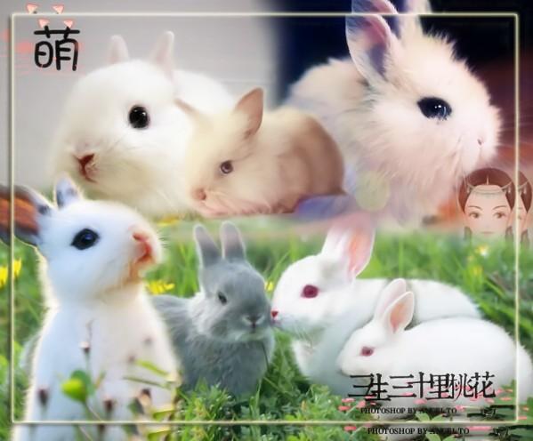 卖萌了~~~哦~我的小可爱,么么哒~~~喜欢这些萌萌的小兔兔就请点一下右